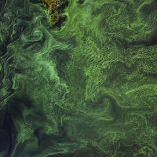 A bloom of cyanobacteria in the central Baltic