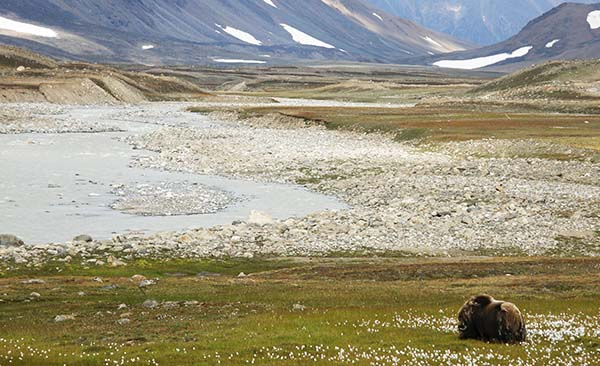 Grazing Of Arctic Wetlands Suppress The Greenhouse Effect