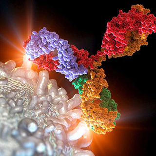 Computer artwork of an antibody or immunoglobulin molecule attacking a leukaemia white blood cell.
