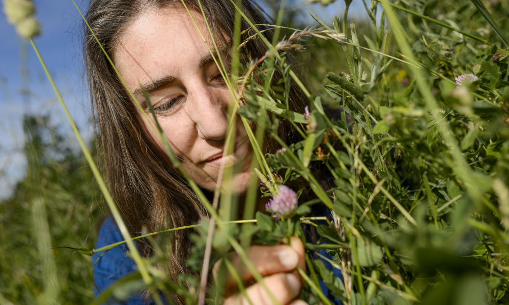 Anna Persson, post doc at the Centre for Environmental and Climate Research, sees a future in urban meadows.
